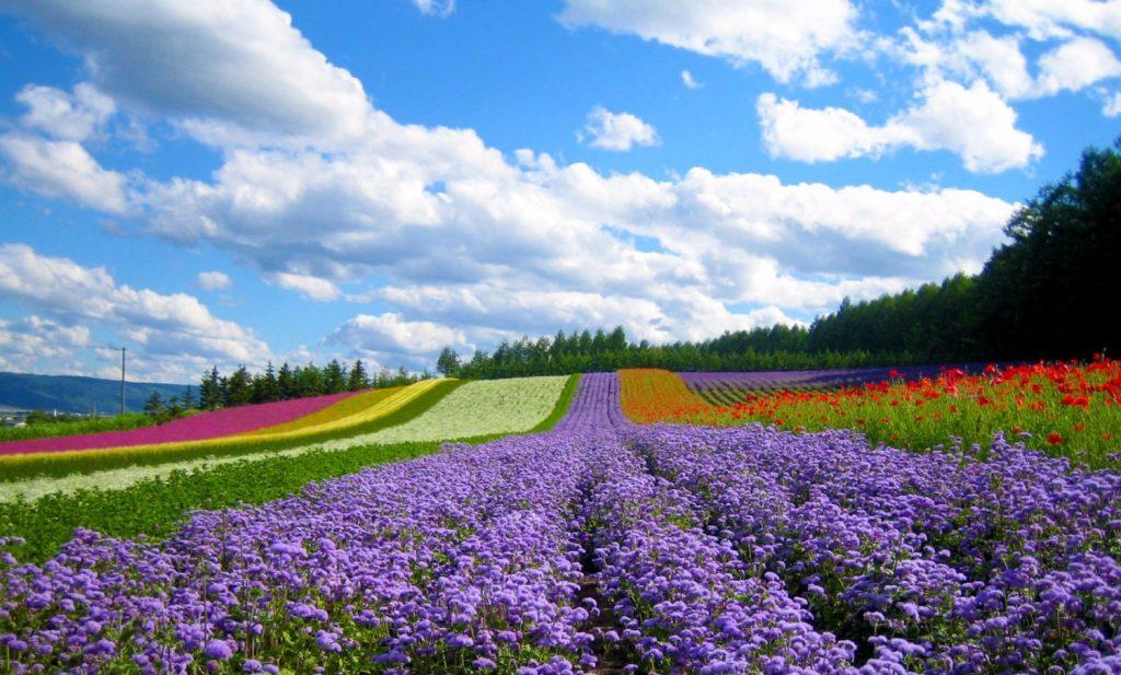 Thời gian du lịch Đà Lạt lý tưởng là vào khoảng tháng 7, 8 và 9 khi thành phố tràn ngập sắc hoa
