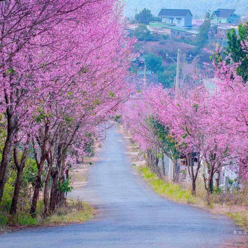 Nên đi Đà Lạt mùa nào đẹp nhất trong năm?