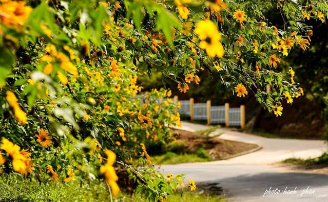 Tháng 10 hoa dã quỳ thi nhau khoe sắc ở Đà Lạt